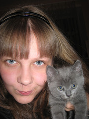 серо-голубые котята